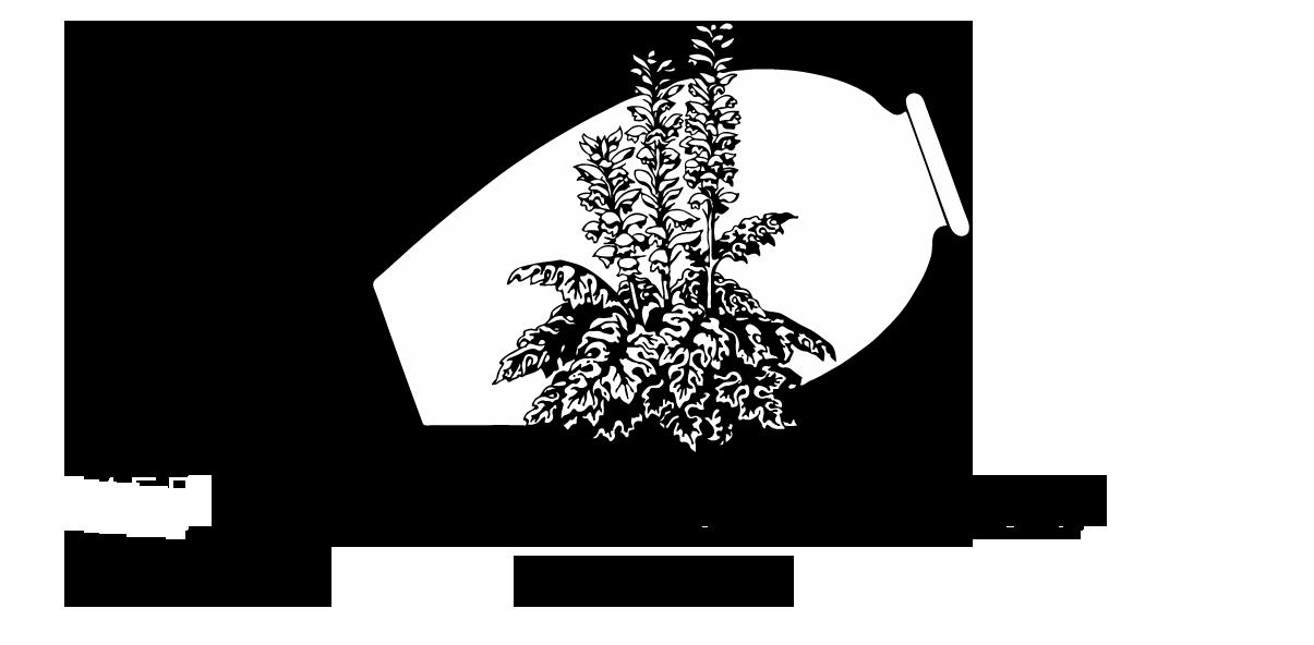 Website_logo_MGS